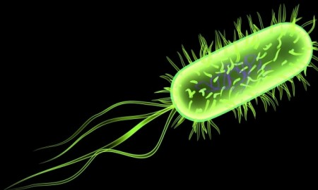 e-coli-programming-language-bacteria