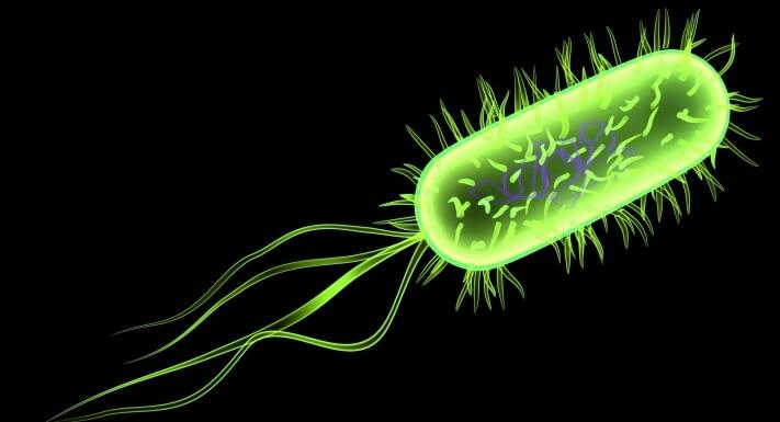 e-coli-programming-language-bacteria