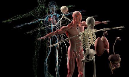 3d-anatomy-app-project-esper-mixed-reality