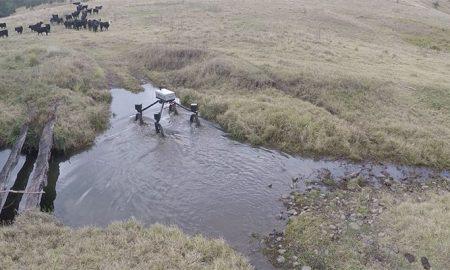 swagbot-herding-cattle
