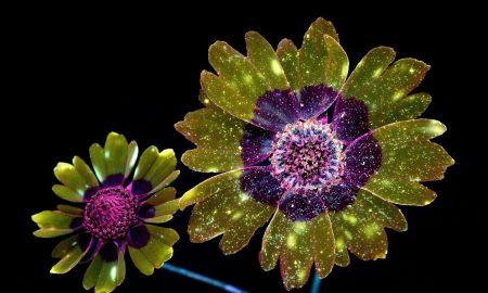 craig burrows fluoresce photography