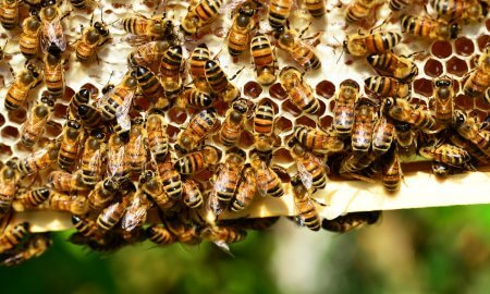 artificial intelligence rescues bees