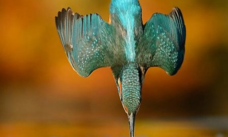 kingfisher photographer alan mcfayden