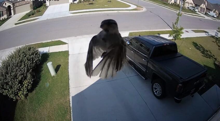 bird floating