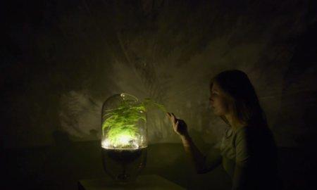 living lights plants