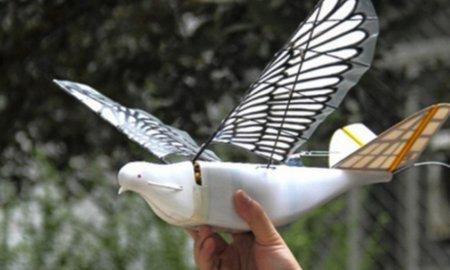 surveillance drones birds