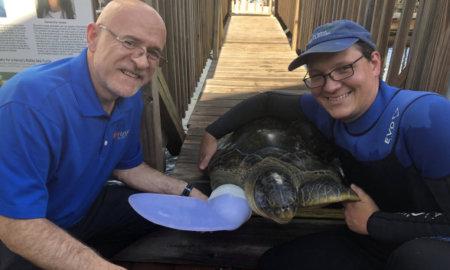 turtle-prosthetic-flipper