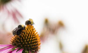 bee-backpack-farming