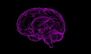 alzheimer-treatment-human-trials