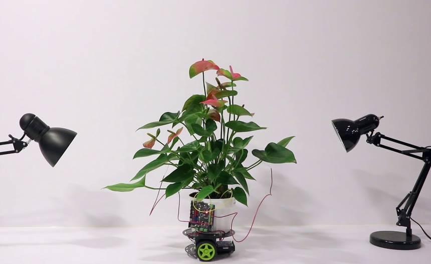 mit-cyber-plant