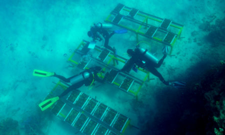 great-barrier-reef-lab-grown-corals