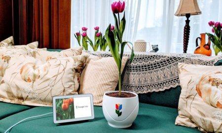 google tulip april fools