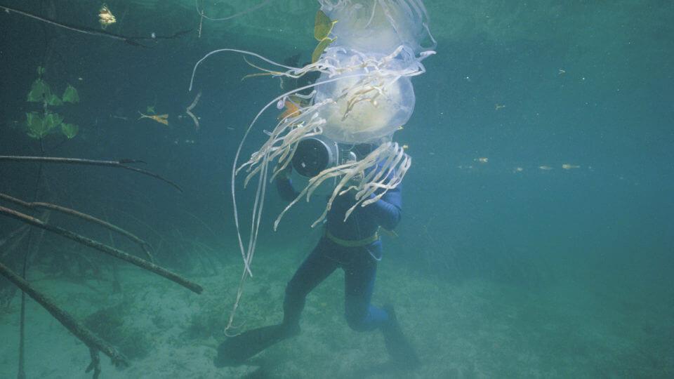 jellyfish-venom-crispr-antidote