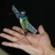 hummingbird-robot-better-than-drones