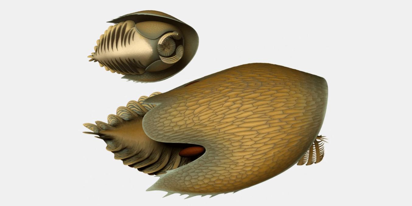 millenium falcon fossil