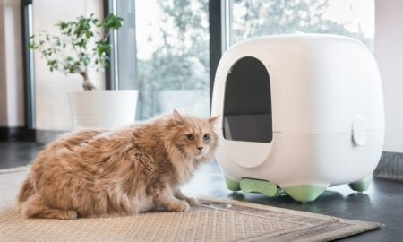 caremitou e-health litterbox smart litter box ces 2020