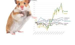 hamster-Goxx