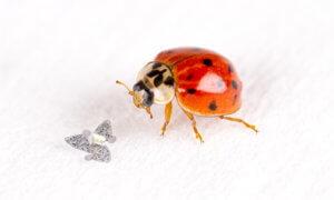 microflier-worlds-smallest-flying-microchip